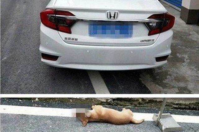 宠物狗未拴绳被车撞死 交警认定肇事司机无须担责