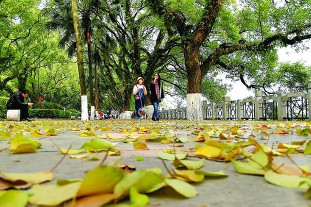 3月桂林繁花似锦 市区内到处都有别样风景
