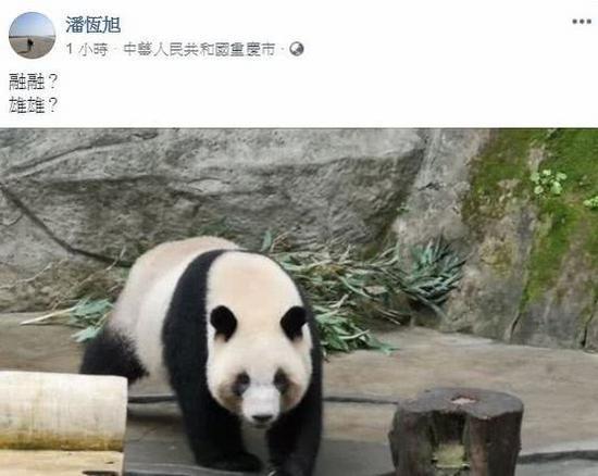 高雄观光局局长潘恒旭发文证实大陆将赠送熊猫给高雄(Facebook截图)
