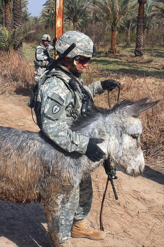 ▲驻阿富汗美军和他心爱的小毛驴