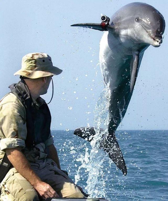 """美媒:美国海军的海豚也暴发""""新型冠状病毒"""""""