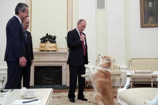 资料图:普京带着安倍赠送的秋田犬会见日本记者