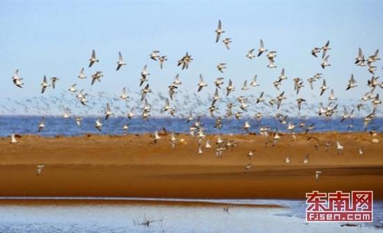 福建省出台湿地保护条例 明年1月1日起施行