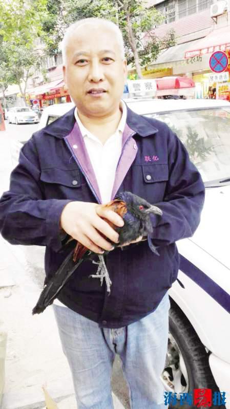 耿师傅小心呵护褐翅鸦鹃。