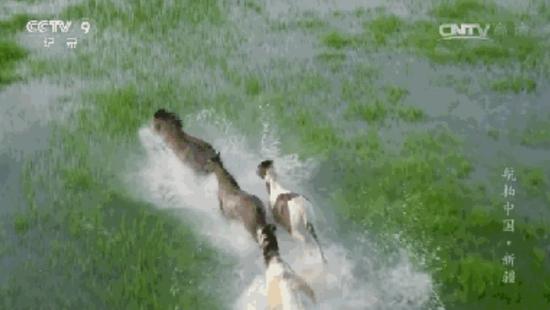 奔腾的烈马,无畏草原上的风尘,溅起阵阵清凉的水花。
