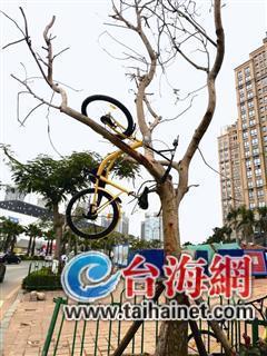单车被人挂在树上