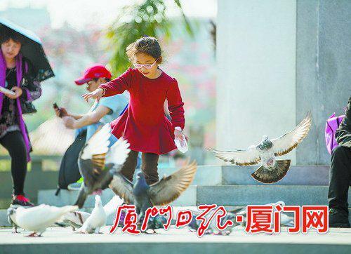 在南普陀游玩的儿童和鸽子都展现出了欢乐和活力。(本报记者 林铭鸿 摄)
