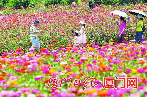 昨日,市民在翔安香山花海享受户外休闲时光。(本报记者郑晓东摄)