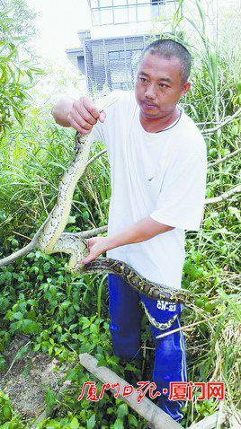 蟒蛇被救上岸。