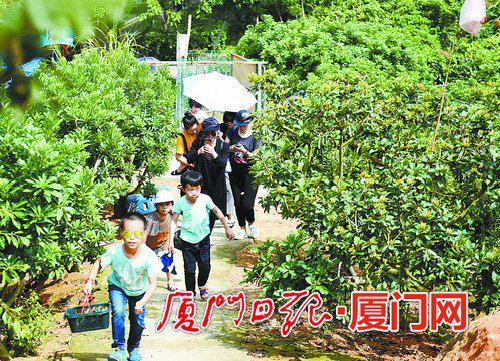 """漳州""""杨梅游""""受追捧 两天五万游客踏青采摘"""