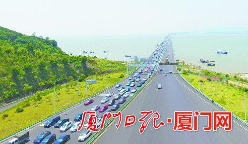▲厦漳大桥上开往漳州港方向的车辆暴增,多数是冲着摘杨梅去的。