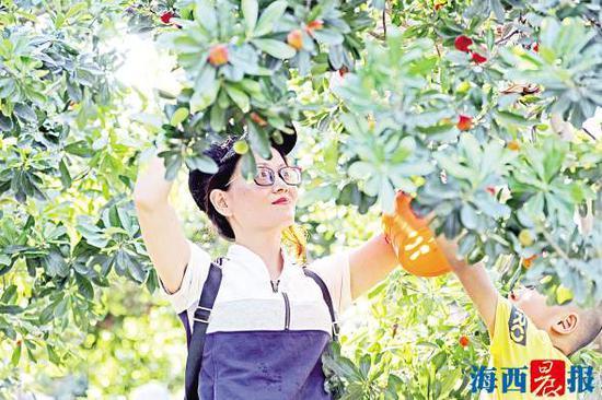 端午假期,不少家长带着孩子前往果园采摘杨梅。