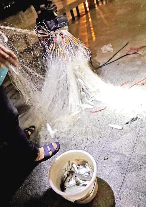 因为被水中渔网缠住,一只白鹭挣扎着死去了。