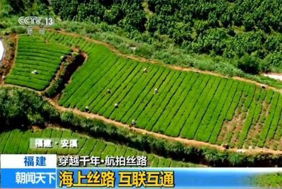中央电视台航拍安溪铁观音罗岩茶叶基地。