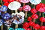厦门六月要防水痘流感 雨季恙虫病来袭别吃毒蘑菇