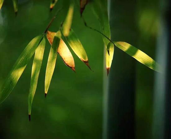 对修行人而言,涅槃是快乐平安的死亡