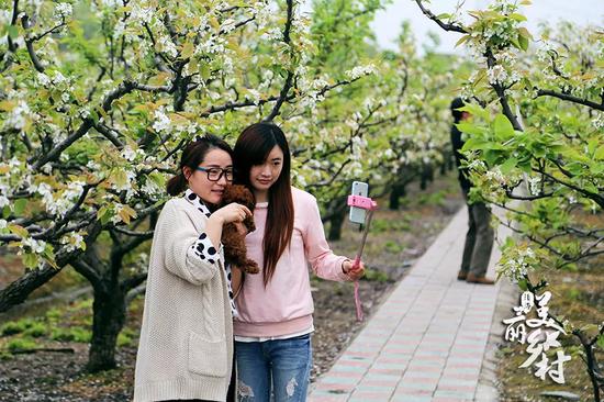 每年3月,光明村的梨花绽放迎客,梨花周便在此时开幕。
