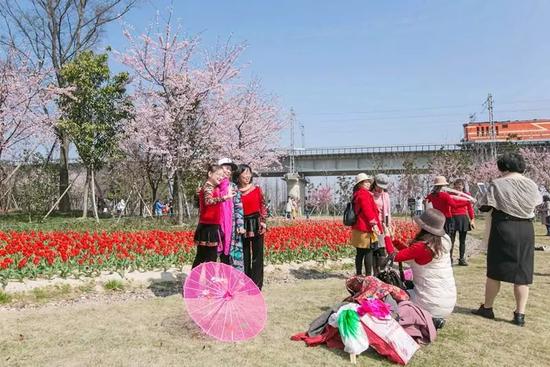 唯美曼妙的樱花开放时间短而集中,预计只有30天左右,不要错过哦~