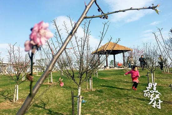 孩子们在松软的草地上奔跑,还有特意来放风筝的呢!