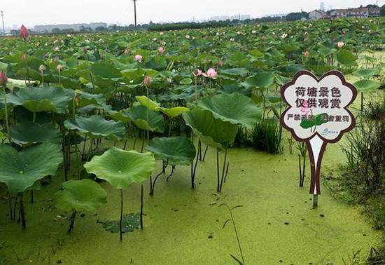 甬江街道外漕村