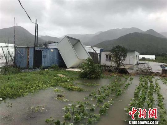 图为农作物被淹 象山县三防办供图 摄