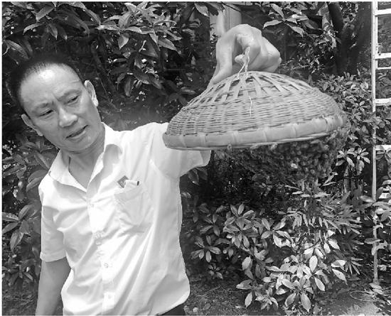 杨师傅手上拎着爬满蜜蜂的特制竹篮