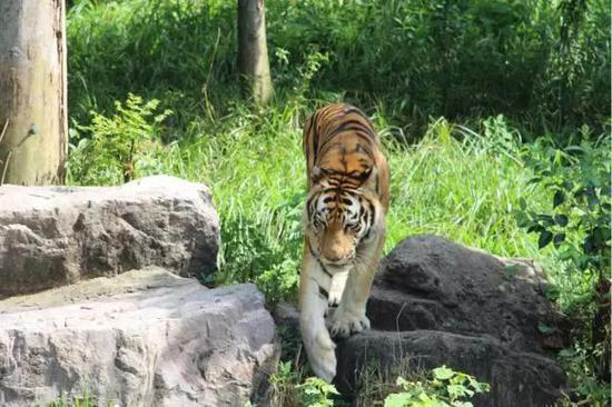雅戈尔动物园首届夏日趴清凉来袭 美女主播上演冰雪之