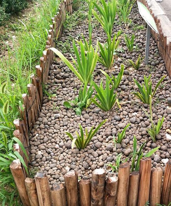 (污泥制成的生物污泥陶粒,已被用在绿化上)