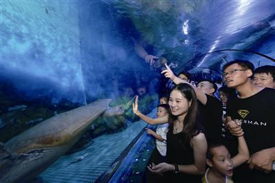 昨日,游客在游览180°海底隧道。
