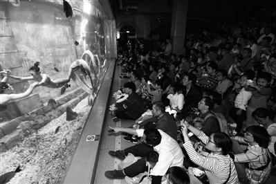 宁波海洋世界美人鱼表演区人气爆棚