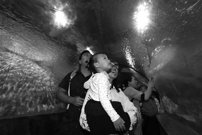 市民在宁波海洋世界游览180°海底隧道
