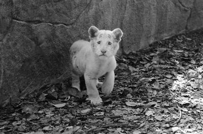 四大洲动物组成国际班亮相宁波1动物园