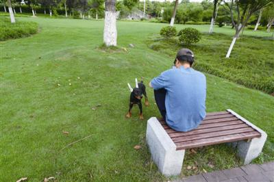 院士公园,遛狗市民没有给狗戴牵引绳。记者张培坚摄
