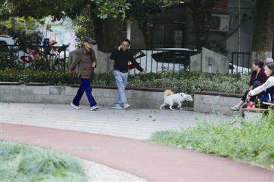 白鹤公园,一位居民牵着狗绳遛狗。