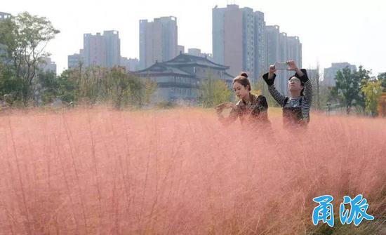 生态,是滨江水韵公园最突出的特点。