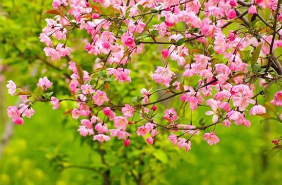 其实,除了上述蔷薇科的植物,还有其它一些植物也值得一看。