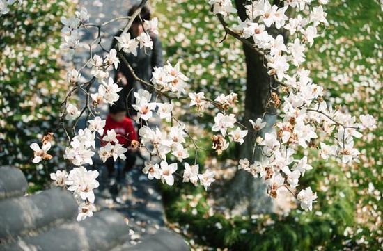 阳春三月,甬城天气晴好,阳光明媚,气温不断回暖。