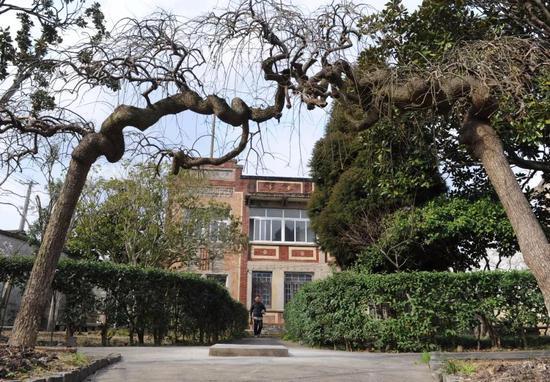 ▲成房屋前2棵80多年的龙爪槐树