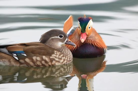 宁波野外藏着《诗经》里的大多数鸟 一起来认识一下