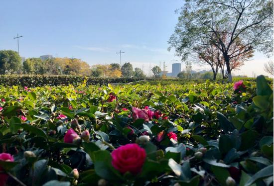 甬城进入晴暖模式如小阳春 周末最高气温或升至20℃