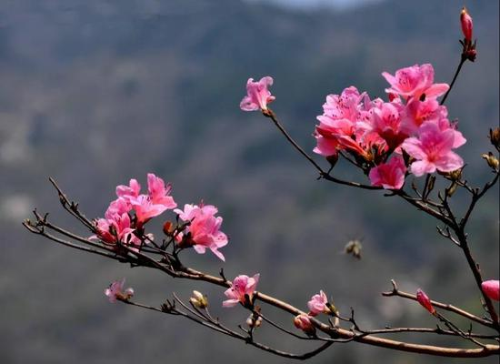 五龙潭风景名胜区