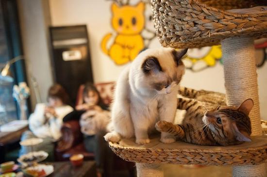 喝着咖啡逗着猫咪 鄞州有一家喵星人咖啡馆