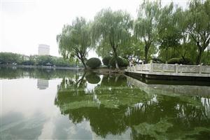 月湖湖水泛绿,水面还漂着一层杂质