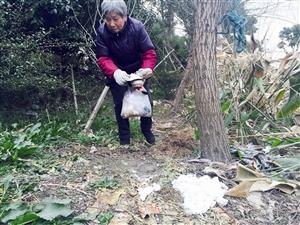 老太太戴着手套,把河边垃圾捡起来装塑料袋里