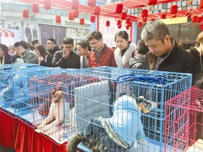 志愿者组织爱心领养动物活动