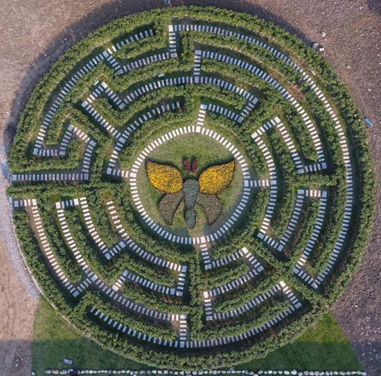 风靡世界的植物迷宫即将亮相宁波 在荪湖度假区内