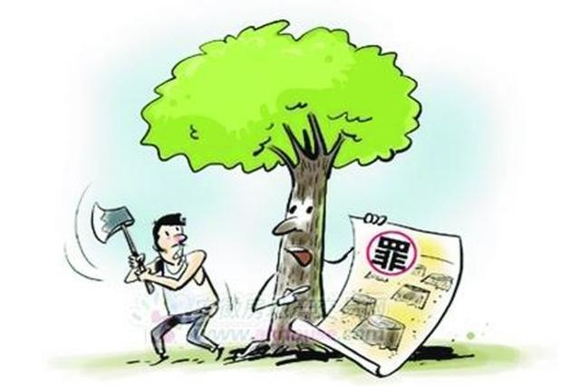 擅自砍树要受罚 宁波城管部门强调:砍伐树木须审批