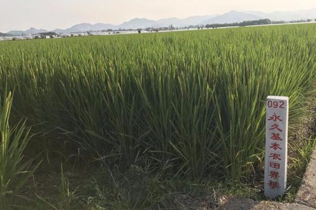 甬划定永久基本农田276万余亩 农田保护新格局形成