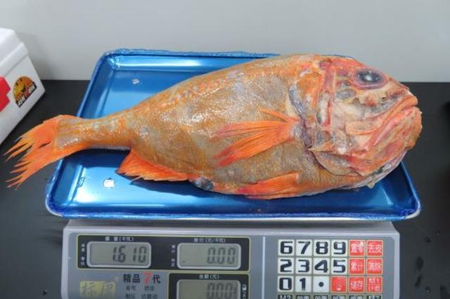 """宁波口岸进口80岁""""高龄""""长寿鱼"""