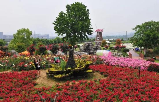 北仑丽盛玫瑰园